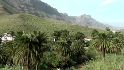 Spain Gran Canary Fataga 004 much palm trees in valley Footage