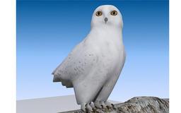 Snow Owl 3D Model Modelo 3D