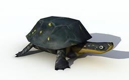 Turtle Yellow head Modelo 3D