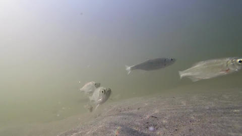 Underwater Fish Background Video Filmmaterial