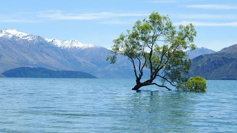 The Famous Wanaka Tree In New Zealand Footage