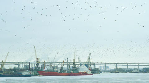 Flock Of Seagulls Over The Industrial Port Footage
