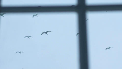 Flock Of Gulls Flies In The Sky Footage
