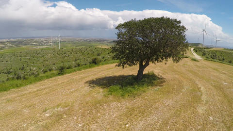 Green tree growing near large wind farm, technology in harmony with nature Footage