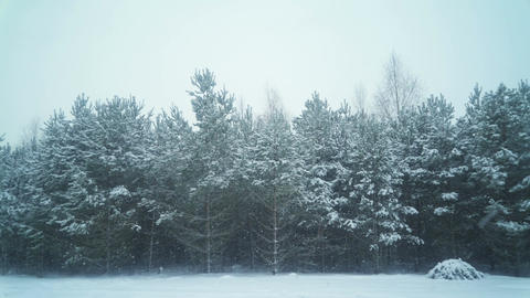 Snow Covered Forest in Winter Season Filmmaterial