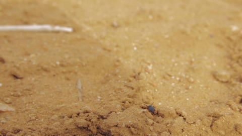 Desert beetle standing on a pile of dry sand and slowly moves its antennae. Then Footage
