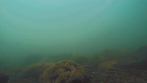 Underwater river flow with fish swims and particles and rocks on the surface Footage