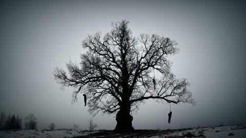 Hangman tree Footage
