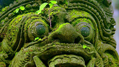 Barong Lion Guard's statue covered with moss. Balinese mythological creature Footage