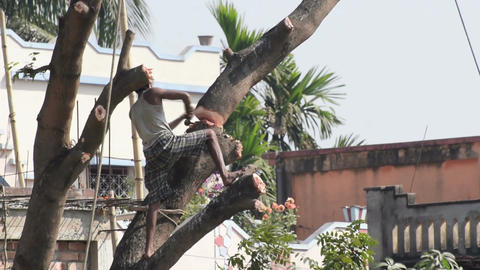 Tree cutting nature destruction environment urbanization Footage
