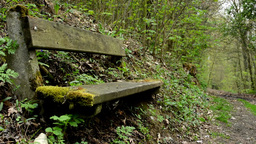 bench overgrown with grass in the forest and path in the background Footage
