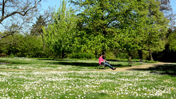 park with a field of daisies and resting people Footage