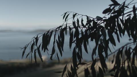 Silhouette leaves rustling Footage