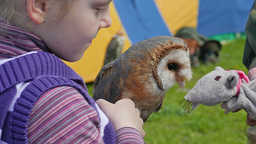 Girl is holding an owl. Barn owl. Slow motion Footage