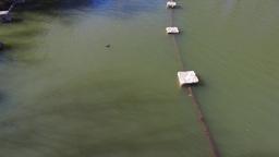 Lake Grapevine Flooded Vineyards Live Action