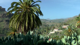Spain Gran Canary Fataga 029 Cacti And Palms In Green Valley stock footage
