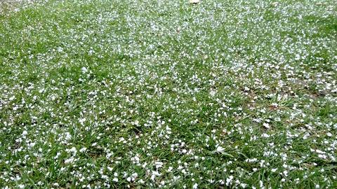 Falling Snow Footage