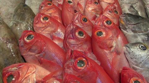 Fresh seafood on stall Footage