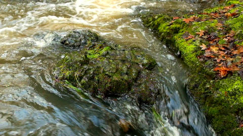 Slow motion. The dry broken maple leaves. Mossy basalt stones in muddy water of Footage