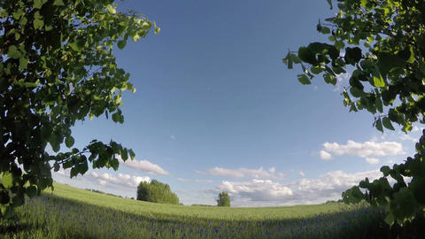 Landscape with green wheat field, time lapse 4k Footage