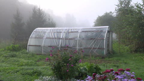 Polyethylene greenhouse in early morning Footage