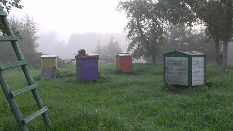 Apiary in early misty morning Footage