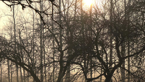 spring morning dark sunrise in old derelict orchard garden in farm Footage