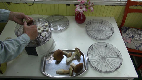 Man preparing to dry edible mushrooms Footage