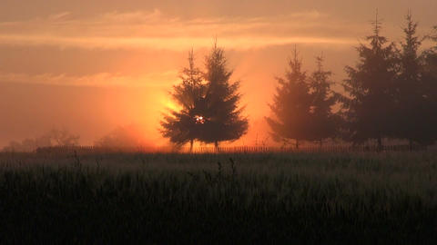 Sunrise in country fields Footage