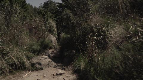 POV through the grasslands Footage