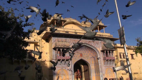 Jaipur, Rajasthan, India, December 2012 - doves flying by the temple Live Action