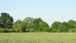 panorama field of crops - trees in background Footage