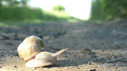 timelapse - snail crawls on the road (in nature) Footage