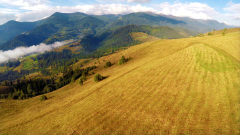 Flying over meadow at beautiful mountain landscape with pine tree highland fores Footage
