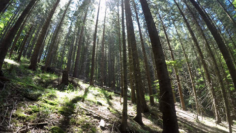 Amazing sunny morning at deep highland forest of Carpathian mountains. Wide angl Footage