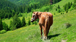 Horse on summer meadow. Amazing sunny day in mountains Footage