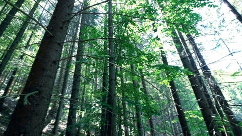 Amazing sunny morning at deep highland forest of Carpathian mountains Footage
