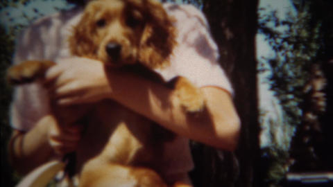 1952: Shy girl gets new golden retriever puppy for spring Footage
