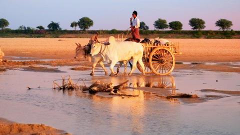 Burmese rural man on wooden cart crossing Irrawaddy river. Myanmar Footage