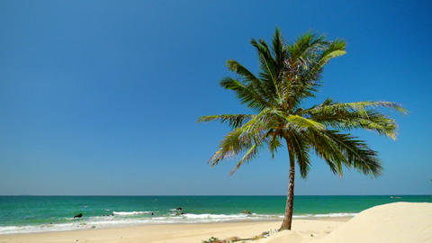 Amazing tropical beach landscape with palm tree, white sand and turquoise ocean Footage