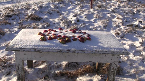 Snow covered red apples covered with snow in the meadow Footage