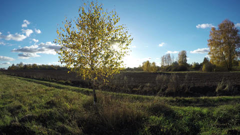 Sun shining on a field with birch trees in the autumn, time lapse 4K Footage