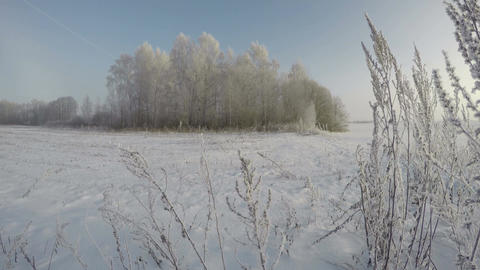 Hoarfrost covered landscape with trees, time lapse 4K Footage