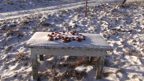 Red apples on the table under snow Footage