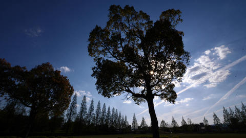木のシルエット、風のある春の公園 ビデオ