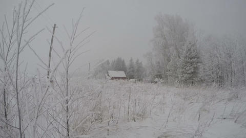 Trees covered with snow and hoarfrost in the homestead during snowstorm mist, ti Footage