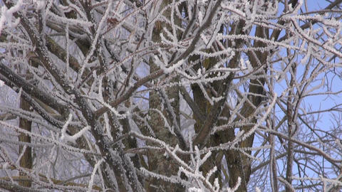 Trees covered with hoarfrost Footage