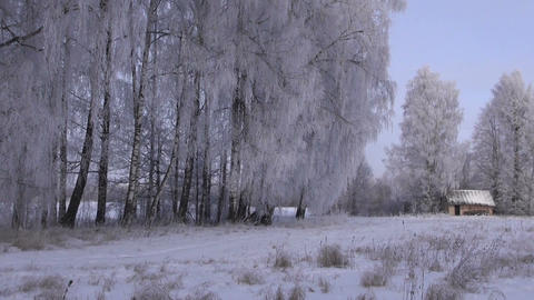 Winter landscape with birch trees and a hut Footage