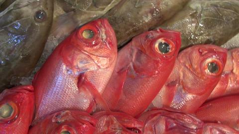 Freshly caught ocean fish in the market Footage