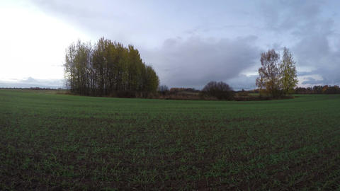 Yellowing birch trees growing in the fields on cloudy rainy autumn's day, time l Footage